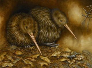 'North Island Brown Kiwi – In the Burrow'