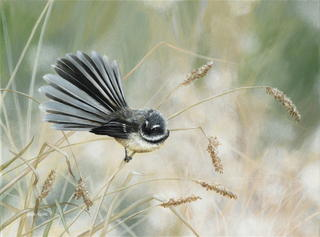 'Morning Light - Fantail'