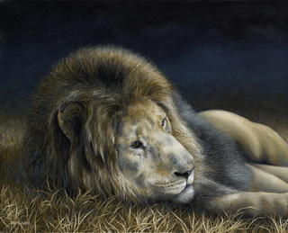 'Africa Dozing - Lion'