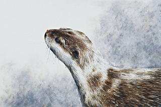 'Short-clawed Asian otter Study 1'