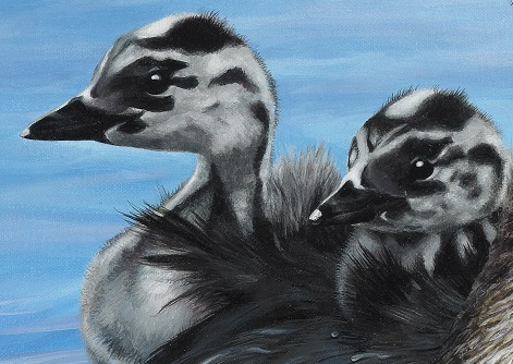Closeup detail of painting by Marie-Claire Colyer Reflections – Australasian Crested Grebes