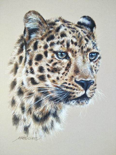 Leopard Study 1 by Marie-Claire Colyer