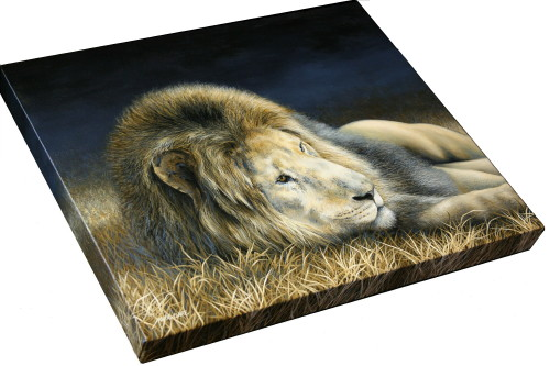 Africa Dozing - Lion painting by Marie-Claire Colyer