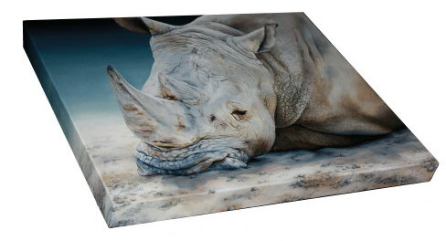 Africa Dozing - White Rhino painting by Marie-Claire Colyer including top and right side view