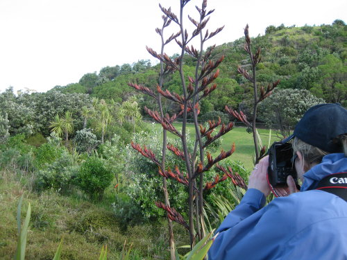 Photographing flax