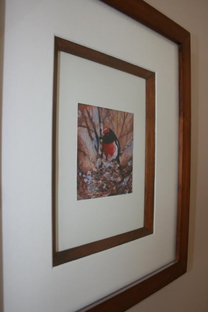 Framed miniature watercolour Red-capped Robin by Marie-Claire Colyer