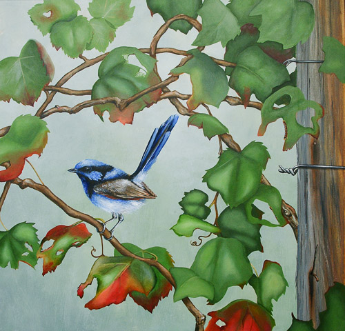 'Superb Fairy Wren - Wine Larking'