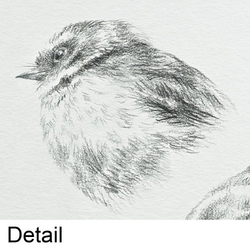 'Fantail Study 1' (detail)