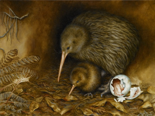 North Island Brown Kiwi (male with chick)