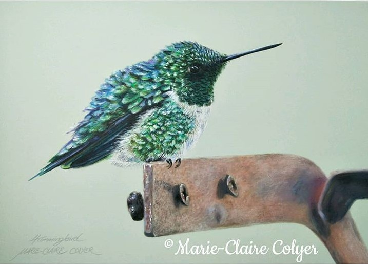 Ruby-throated hummingbird drawing by Marie-Claire Colyer