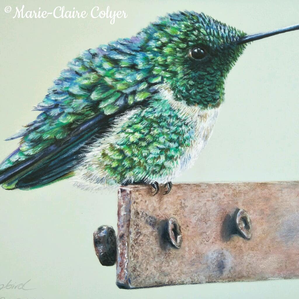 Hummingbird on rusted metal - drawing by Marie-Claire Colyer