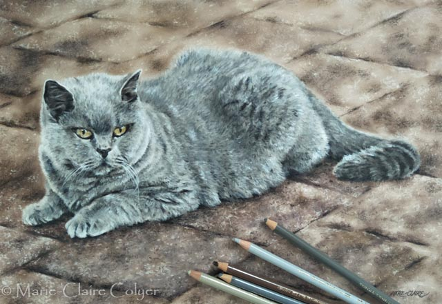 Baelie cat portrait commission by Marie-Claire Colyer