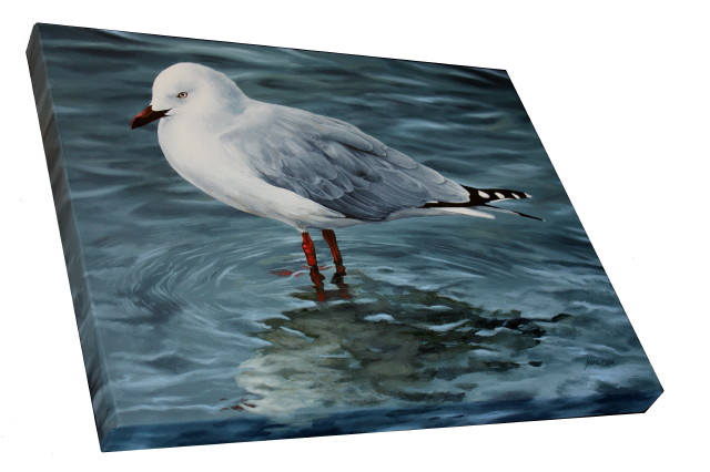 Painting by Marie-Claire Colyer Reflections - Red-billed Gull'