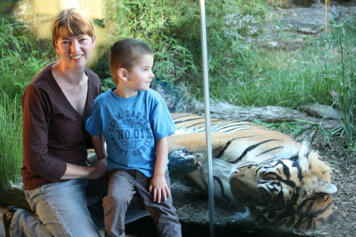 The artist with Oz the Sumatran Tiger at Auckland Zoo